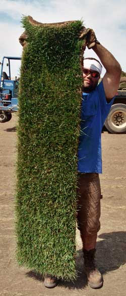 Holding Sod